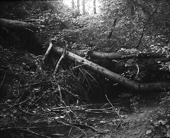 woodslarge1printweb