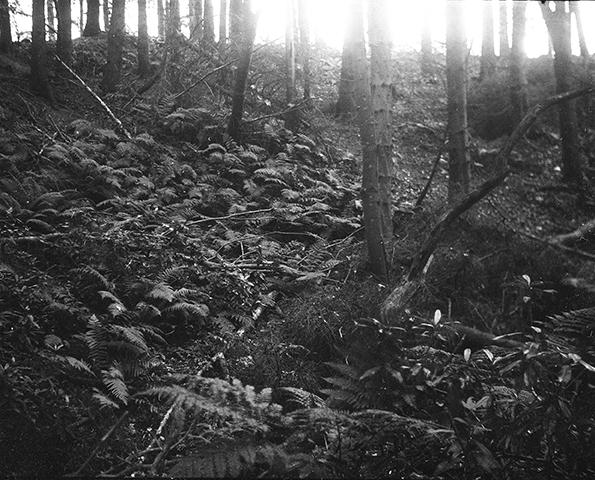 woodslarge2printweb
